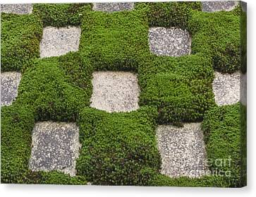 Moss And Stepping Stones Canvas Print by Rob Tilley