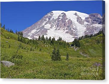 Mount Rainier Meadow Canvas Print by Sean Griffin