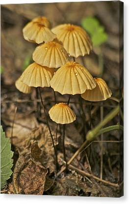 Mushrooms Canvas Print by Michael Peychich