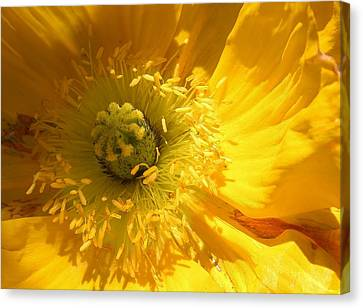 Natures Wonder Canvas Print by Bruce Bley