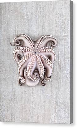 Octopus Canvas Print by Fausto Favetta Photoghrapher