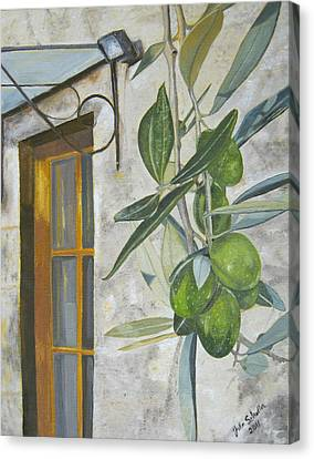 Olives In Tuscany Canvas Print by John Schuller