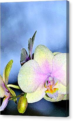 Orchid 1 Canvas Print by Pamela Cooper