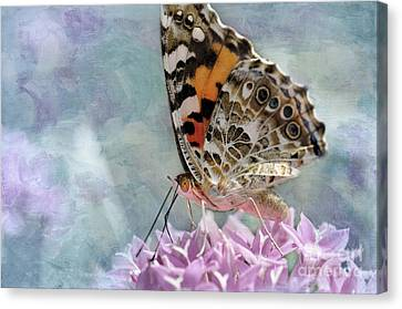 Painted Lady Butterfly Canvas Print by Betty LaRue