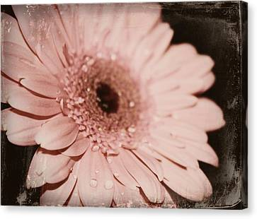 Pale Pink Canvas Print by Cathie Tyler