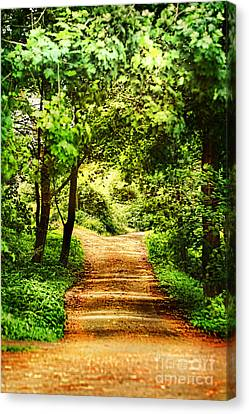 Path Canvas Print by HD Connelly