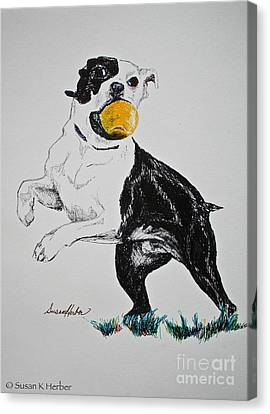 Play Ball Canvas Print by Susan Herber