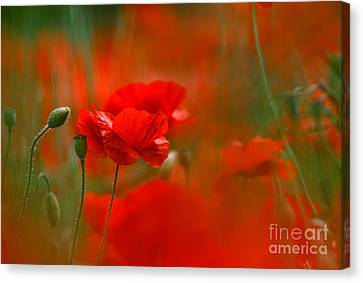 Poppy Flowers 02 Canvas Print by Nailia Schwarz