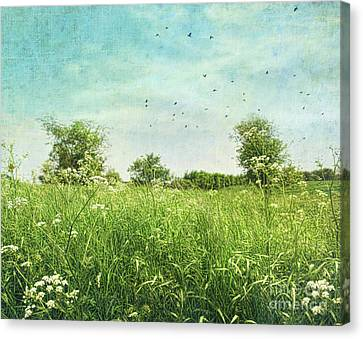 Queen Anne's Lace Wildflowers Canvas Print by Sandra Cunningham