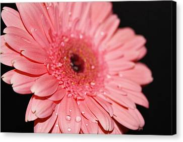 Rain Drops Canvas Print by Cathie Tyler