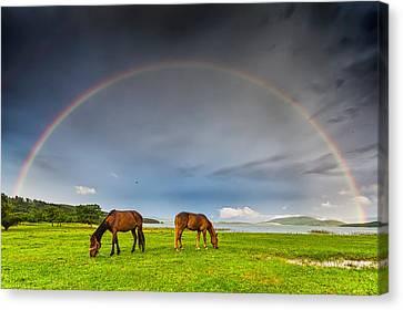 Rainbow Horses Canvas Print by Evgeni Dinev