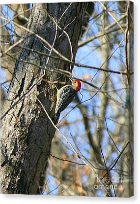 Red Bellied Woodpecker Canvas Print by Neal  Eslinger