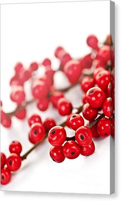 Red Christmas Berries Canvas Print by Elena Elisseeva