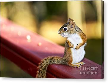 Red Squirrel On Railing Canvas Print by Elena Elisseeva