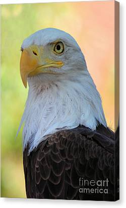 Regal Eagle Canvas Print by Linda Eshom