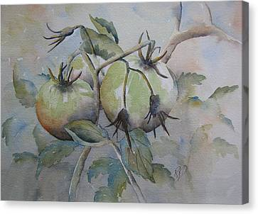 Ripening On The Vine Canvas Print by Ramona Kraemer-Dobson