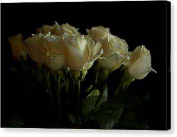 Roses Canvas Print by Mario Celzner