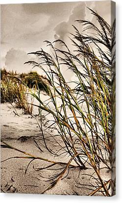 Sea Oats Canvas Print by Kristin Elmquist