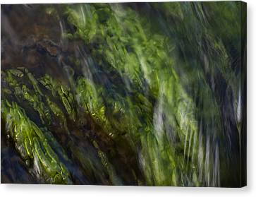 Sea Weed Canvas Print by Michael Mogensen