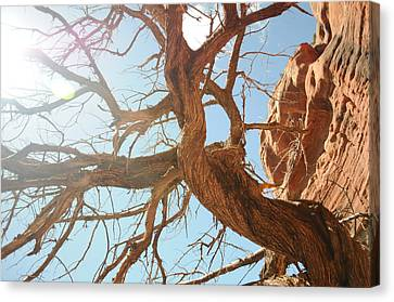 Sedona 013 Canvas Print by Earl Bowser