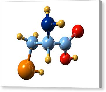 Selenocysteine, Molecular Model Canvas Print by Dr Mark J. Winter