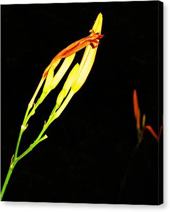 Sleeping Iris Canvas Print by Todd Sherlock