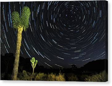 Star Trails In Joshua Tree Canvas Print by Dung Ma