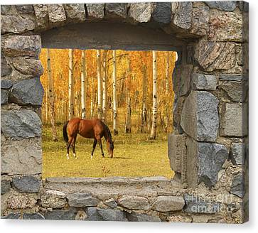 Stone Window View And Beautiful Horse Canvas Print by James BO  Insogna