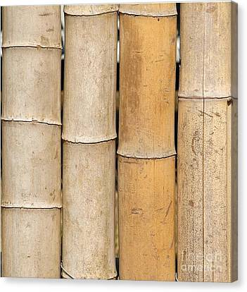 Straight Bamboo Poles Canvas Print by Yali Shi
