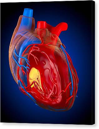Structure Of A Human Heart, Artwork Canvas Print by Roger Harris