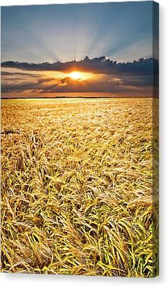 Sunset Wheat Canvas Print by Meirion Matthias
