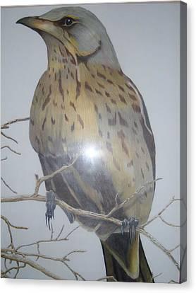 Swedish Bird Canvas Print by Per-erik Sjogren