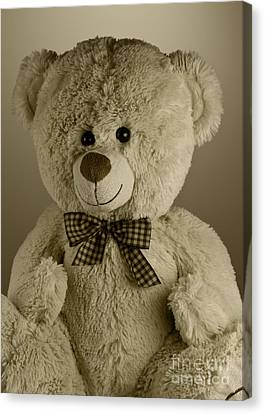 Teddy Bear Canvas Print by Blink Images