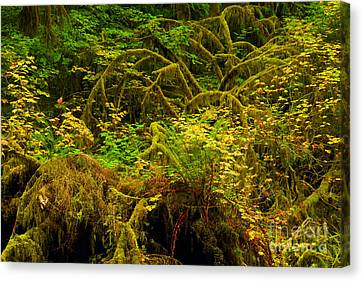 Temperate Rain Forest Canvas Print by Adam Jewell