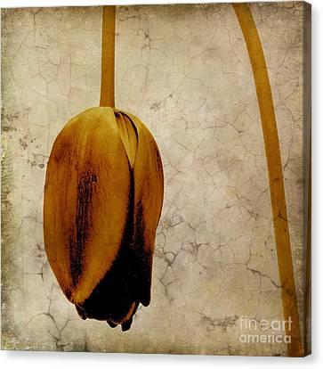 Textured Tulip Canvas Print by Bernard Jaubert
