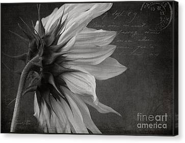 The Crossing  Canvas Print by Sharon Mau