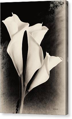Three Calla Lilies Canvas Print by Lisa  Spencer