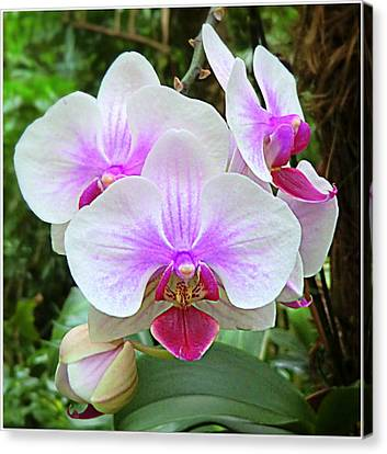 Tropical Orchids Canvas Print by Mindy Newman