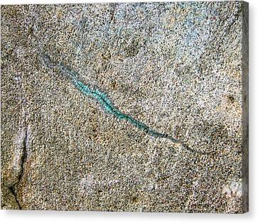 Turquoise Worm Canvas Print by Robert Knight