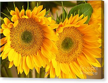 Twins Canvas Print by Bob and Nancy Kendrick