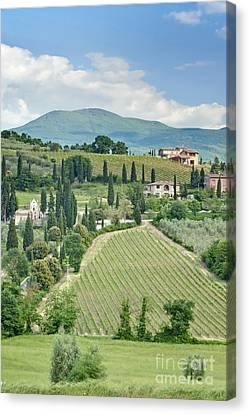Vineyards On A Hillside Canvas Print by Rob Tilley