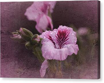 Vintage Geranium Canvas Print by Richard Cummings