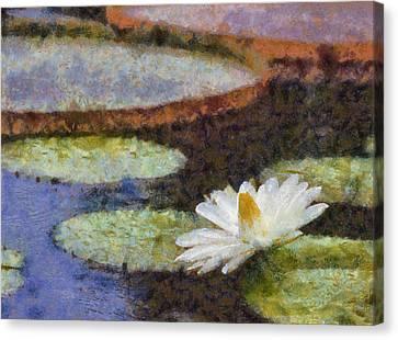 Water Garden Canvas Print by Paul Slebodnick