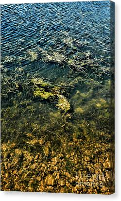 Water Canvas Print by HD Connelly