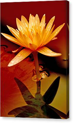Water Lily 1 Canvas Print by Julie Palencia