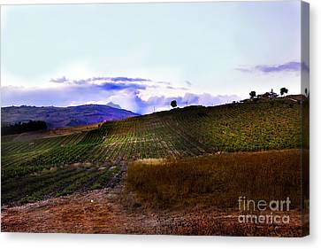 Wine Vineyard In Sicily Canvas Print by Madeline Ellis