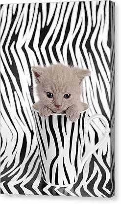 Zebra Cat Canvas Print by Waldek Dabrowski