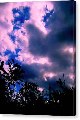 Looking Up  Canvas Print by Allen n Lehman