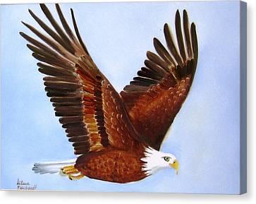 1149b  Bold Eagle 3 Canvas Print by Wilma Manhardt