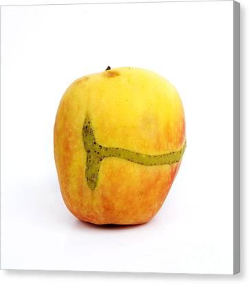 Apple Canvas Print by Bernard Jaubert